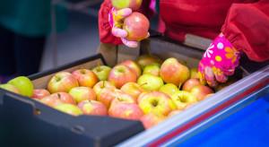 Eksporter: warto podjąć ryzyko i sprzedawać polskie jabłka do Azji