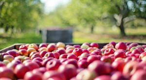 Mniejsze zbiory jabłek w Chinach spowodują obniżenie światowej produkcji