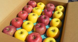 Analiza: Eksport polskich jabłek wzrośnie. Mniejsza będzie jego wartość