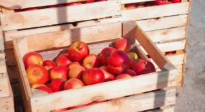 Ceny jabłek deserowych we wrześniu osiągnęły historycznie niski poziom