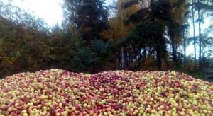 Sadownicy są sfrustrowani. Wyrzucają jabłka