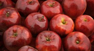 Na rynku pojawiła się nowa odmiana jabłek - Morgana
