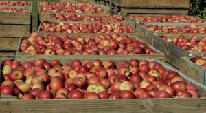 Senacka dyskusja nt. problemu nadpodaży jabłek i ograniczonych rynków ich zbytu