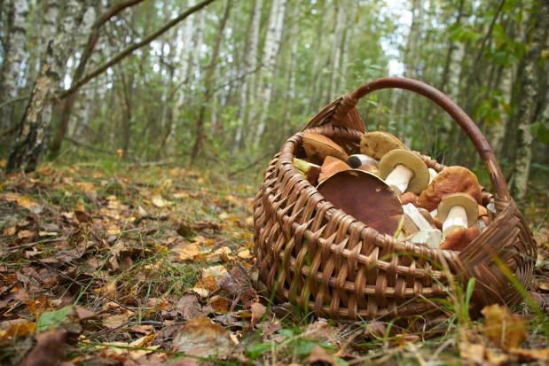 Badanie CBOS: Polacy chętnie chodzą na grzybobranie