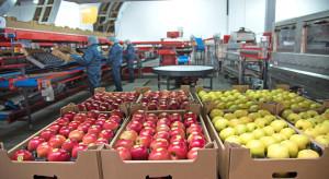 Popyt na jabłka deserowe nadal na niskim poziomie