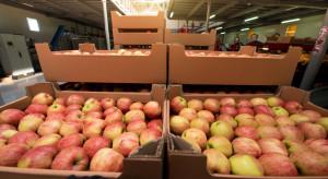 Duży mołdawski producent owoców spodziewa się wzrostu cen jabłek w styczniu