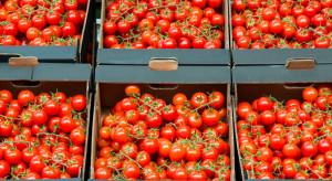 Wzrósł eksport marokańskich pomidorów do Europy