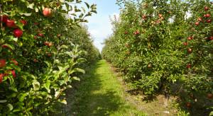 Wymiana sadów na odmiany kwaśne alternatywą na przyszłość sadownictwa?