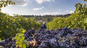 Dobry rok dla branży winiarskiej. Tylko Portugalia bez wzrostu produkcji