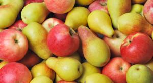 Raport: Chińskie zapotrzebowanie na jabłka i gruszki jest nadal wysokie