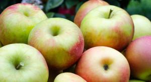 Mołdawia po raz pierwszy eksportuje jabłka do Arabii Saudyjskiej