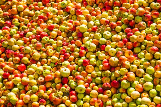 Ceny jabłek przemysłowych nadal niskie. Interwencyjny skup jabłek nie pomógł?
