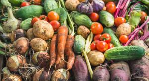 Netto poszerza ofertę produktów marki własnej o ekologiczne warzywa