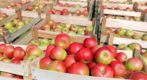 W styczniu Mołdawia wyeksportuje jabłka na rynek izraelski