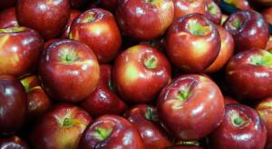 Wytworzono wosk z naturalnych składników do zabezpieczania jabłek