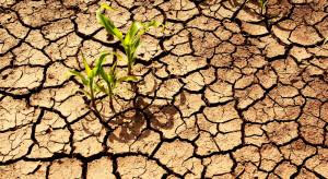 Powstanie nowy system oceny klęski suszy w rolnictwie