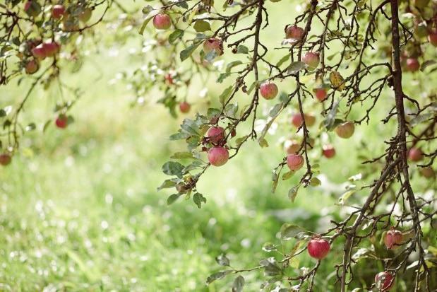 Gdańsk: Leśnicy posadzili drzewa i krzewy owocowe, aby zapewnić pokarm zwierzętom