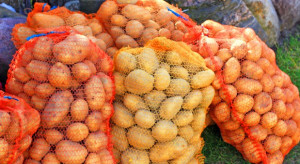 Mniejsze zbiory ziemniaków. Ceny będą nadal rosły