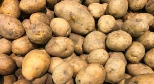 Ziemniaków jest znacząco mniej niż w poprzednim sezonie