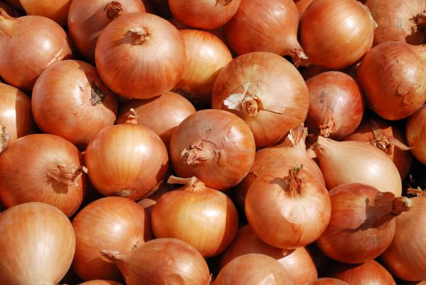 Rolnicy opóźniają sprzedaż cebuli licząc na dalszy wzrost cen