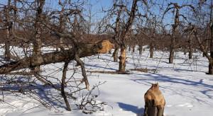 Podkarpackie: Zwierzęta chronione wyrządziły szkody rolne za ponad 390 tys. zł