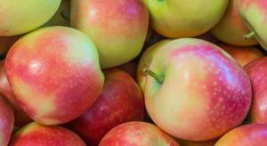 Ukraina wyeksportowała jabłka do 5 krajów Bliskiego Wschodu