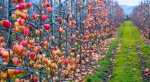 Ważne zabiegi po zbiorach owoców