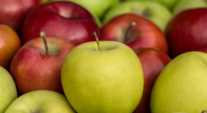 Południowy Tyrol: Hurtowe ceny jabłek Gala, Golden i Red Delicious (analiza)