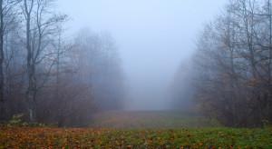 Pogoda: Nastąpi chwilowe ocieplenie. Będzie mglisto i deszczowo