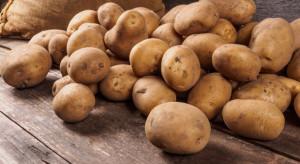 Niemcy: Rosną ceny ziemniaków