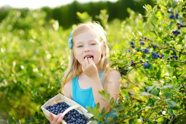 Badanie: Borówki mogą poprawić pamięć dzieci w wieku szkolnym