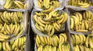 160 kg narkotyków w bananach. Będzie międzynarodowa współpraca
