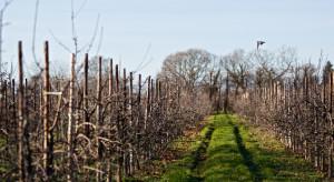 Jesienne nawożenie sadów i plantacji jagodowych – wapnowanie