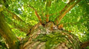 UR Kraków: Opracowano innowacyjną metodę modelowania wzrostu drzew