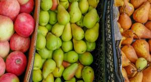 Hiszpania liczy na wzrost produkcji jabłek. Mniejsze będą plony gruszek