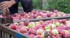 Nadpodaż owoców i nieopłacalna produkcja wymuszają zmiany na rynku
