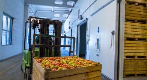 Rosja: Powstał obiekt przechowalniczy dla jabłek o powierzchni blisko 7 tys. ton