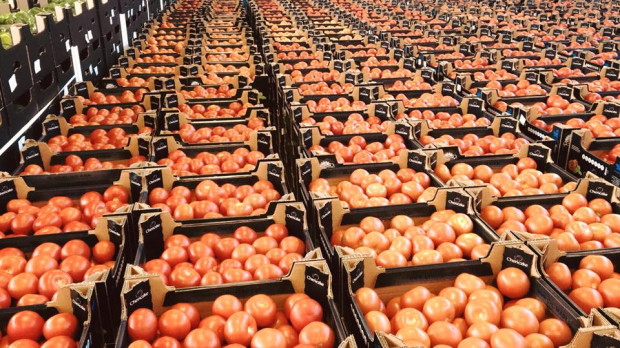 Chenczke-Logistic: Zaczęło się od pomidorów...