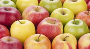 W Sanoku trwa akcja rozdawania jabłek