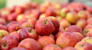 Mazowieckie: Niewielkie wzrosty ceny jabłek przemysłowych