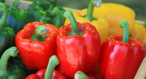 Papryka jest produktem łatwo sprzedawalnym – wywiad z prezesem GPOiW Polska Papryka