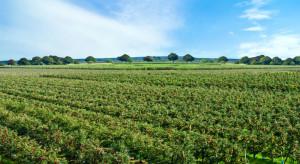 Rosja inwestuje w rozwój sadów jabłoniowych w Republice Adygei