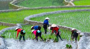 Japonia otwiera się na zagranicznych pracowników, także w rolnictwie