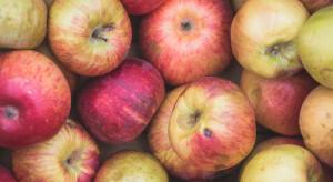 Mazowsze: Ceny jabłek przemysłowych wzrosły do 15-18 gr/kg