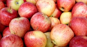 Ukraina: Rekordowy eksport jabłek w listopadzie