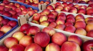UE zwiększa eksport jabłek do Chin