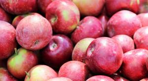 Senegal, Kamerun i Indonezja nowymi odbiorcami ukraińskich jabłek