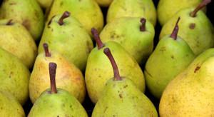 Argentyńscy eksporterzy gruszek ponieśli ogromne straty na rosyjskim rynku