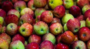 Ukraina: Niskie ceny i brak popytu na jabłka