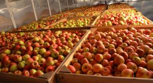 Warto kontrolować stan jabłek w chłodniach KA